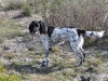 sally-with-quail-1-19-12