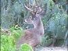 hunting8